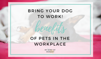 7 reasons to bring your furry friend into the office with you (as if you needed them!)